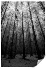 Forest Trees, Print