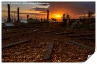Worthing  Waterwise Garden at Sunset  , Print