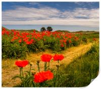 Pathway to the Poppies, Print