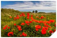 The floral beauty of Bamburgh, Print