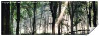 Deep forest morning light, Print
