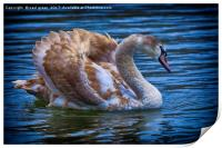 Young Swan, Print