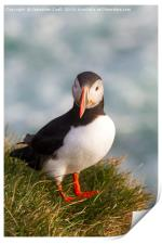 Iceland Puffin, Print