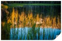 Reflection in a Pond, Print