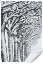 Trees and snow, Print