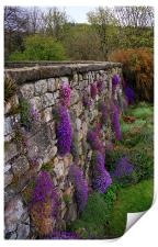 Wall of Flowers, Print