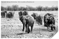 African elephants with young approaching waterhole, Print