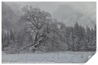 Yosemite Winter , Print