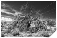 Tree Of Life Joshua Tree 7325, Print