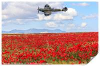 Poppy field and clouds, Granada Province, Spain, Print