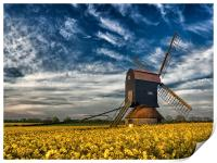 Stevington Windmill surrounded by Rapeseed at sunr, Print