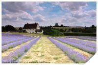 Lavender field in the Cotswolds, Print