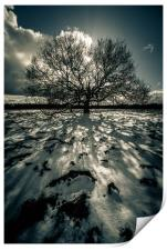 Shadows in the Snow, Print