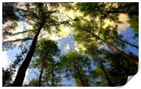 Trees in the New Forest, Print