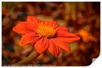 Mexican Sunflower with autumnal colored background, Print