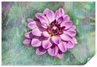Pink dahlia with paint effect background, Print
