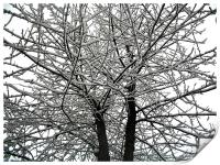 Snow on tree branches , Print