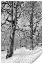 The Chestnut Walk Dalzell Estate Motherwell, Print