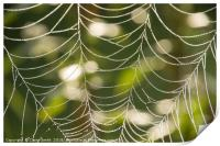 Abstract close-up glistening dew covered cobweb, Print
