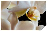 inside an orchid, Print