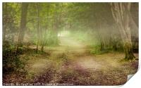 Tehidy Woods covered in mist, Print