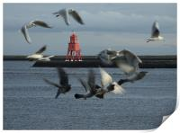 Gulls and Harbour light  041207 , Print