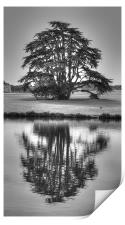 Reflections Tree, Print