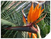 Bird of Paradise Crop, Print