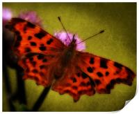 Comma Butterfly, Print