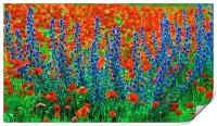 Wild Lupins and Poppies, Print