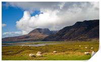 Grazing Sheep by Loch Torridon, Print