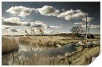 Reed beds at Hickling Broad, Print