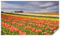 Across colorful fields, Print