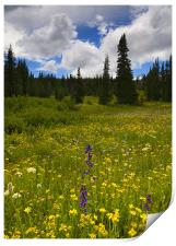 Wildlflower Meadow, Print