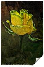 Rose Of Yellow, Print