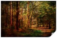 Holt Country Park 32, Print