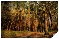 Holt Country Park 36, Print
