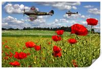 Spitfires and Poppy field, Print