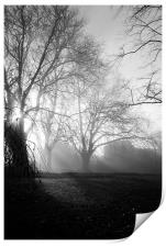 Misty Morning, Print