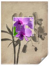 Framed Orchid's, Print