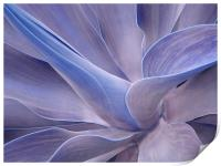 Agave in Shades of Lilac, Print