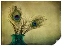 peacock feathers and vase, Print