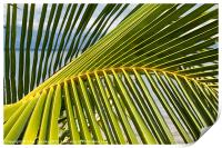 Palm frond at the beach, Print