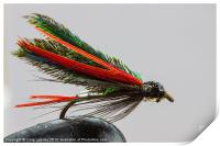 Trout fishing fly, Print