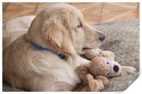 puppy with toy, Print