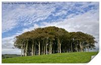 Hill Top Copse, Print