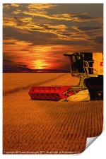 Harvest Summer Sunset, Print