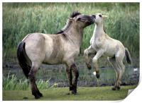 Mother And Foal. Polish Konik Horses, Print