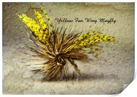 Yellow Fan Wing Mayfly, Print