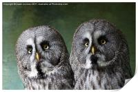 Double Take, Pair of Owls, Print